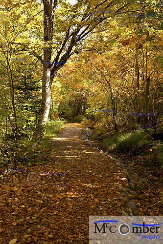 Sentier dans le Hautes Gorges de Charlevoix l'automne