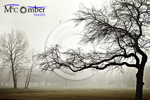 Twisted tree silhouette in fog