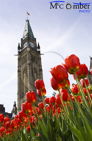 Ottawa parliament tower with tulips