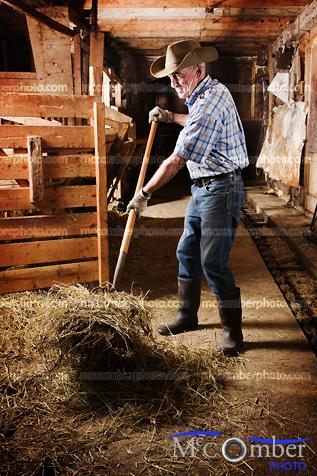 Stock photo: Farmer forking hay in an old barn