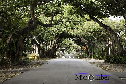 Miami Coral Gables street
