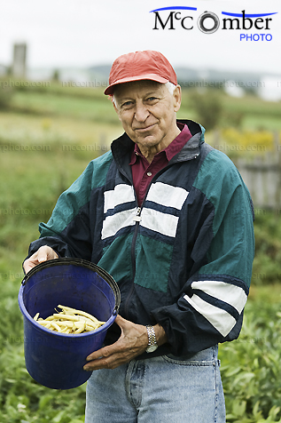 Stock photo: Senior farmer shows his fresh beans