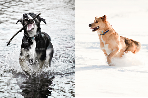 Stock Photo Gallery: Dogs