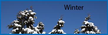 Stock photo lightbox: Winter