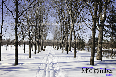 Stock Photograph: Winter in a Montreal park