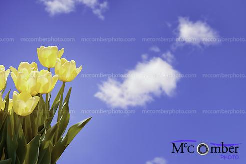 Stock photograph - Springtime!