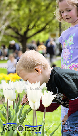 Editorial Stock Photo - Little boy smelling tulips