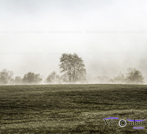 Stock Photo - Pastures in fog at the edge of the woods