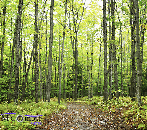 Stock Image: Autumn forest background with trail