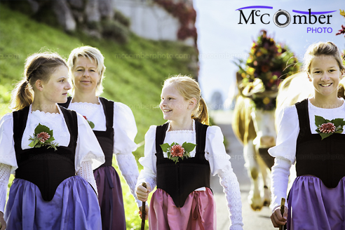 Stock Image: All Female Swiss farming family leading cows to fair