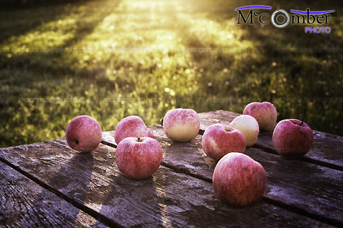 Stock Image: Dew-covered Apples on rustic table