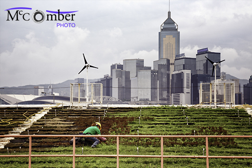 Editorial Stock Image - Urban Gardening